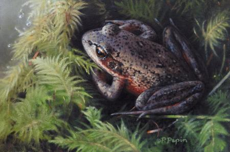 Northern Red Legged Frog | Wallhanging by Patricia Pepin | Artists for Conservation 2020