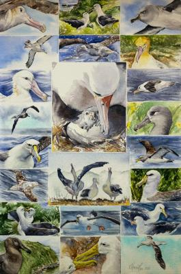 All for One, One for All - Albatross | Wallhanging by Kitty Harvill | Artists for Conservation 2020