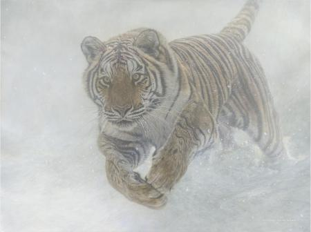Invincible - Siberin Tiger | Wallhanging by Michael Pape | Artists for Conservation 2021