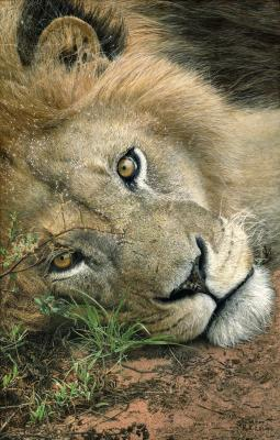 Only Have Eyes for You | Wallhanging by Bruce Lawes | Artists for Conservation 2021