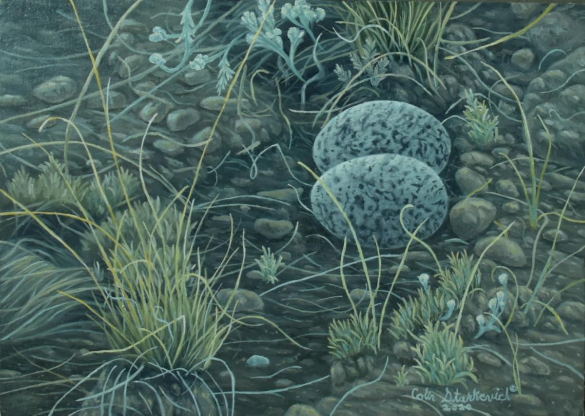Add Artwork   Wallhanging by Colin Starkevich   Artists for Conservation