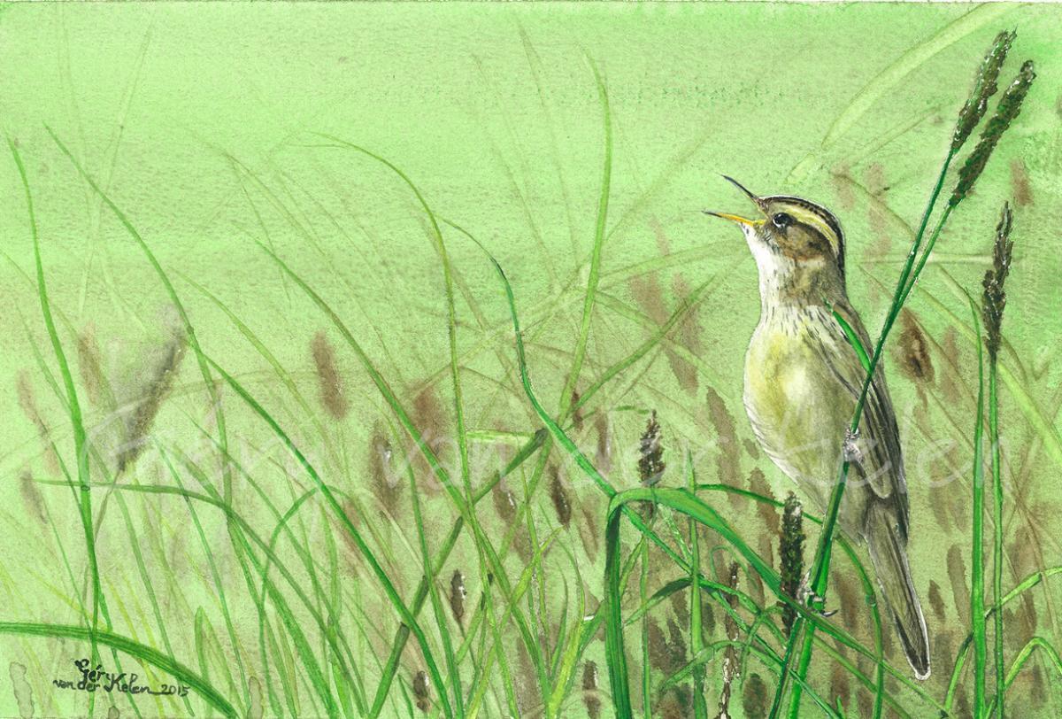 Edit Artwork   Wallhanging by Gery van der Kelen   Artists for Conservation