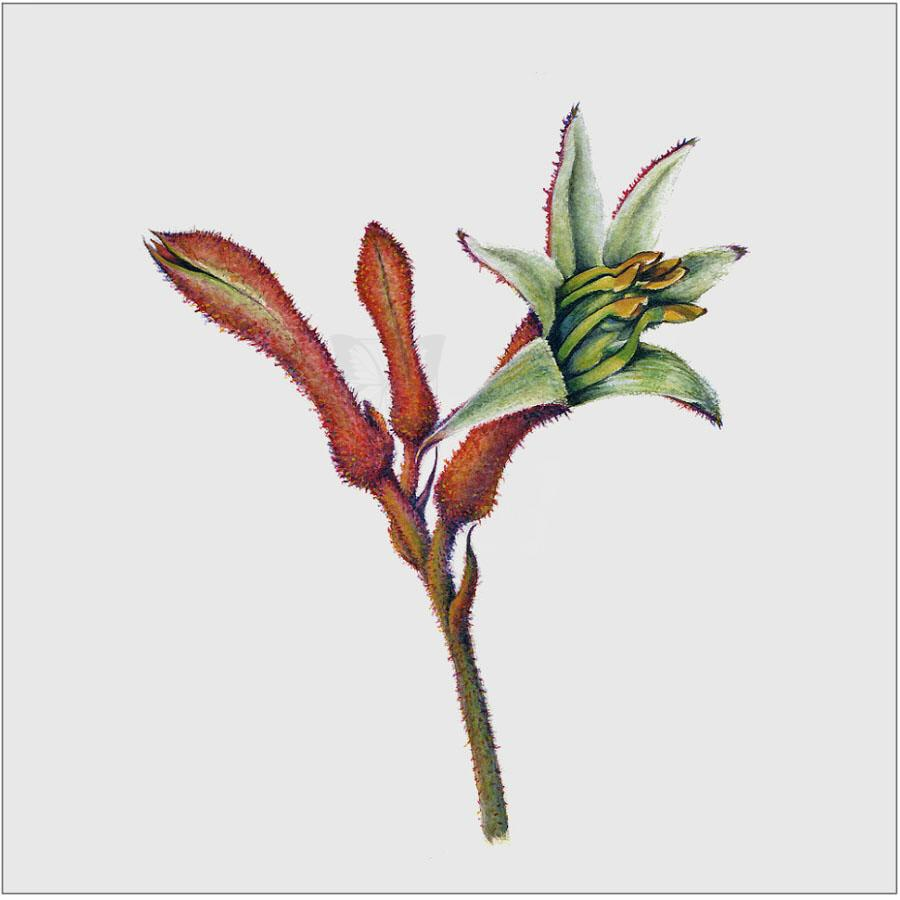 | Wallhanging by Linda Martin | Artists for Conservation