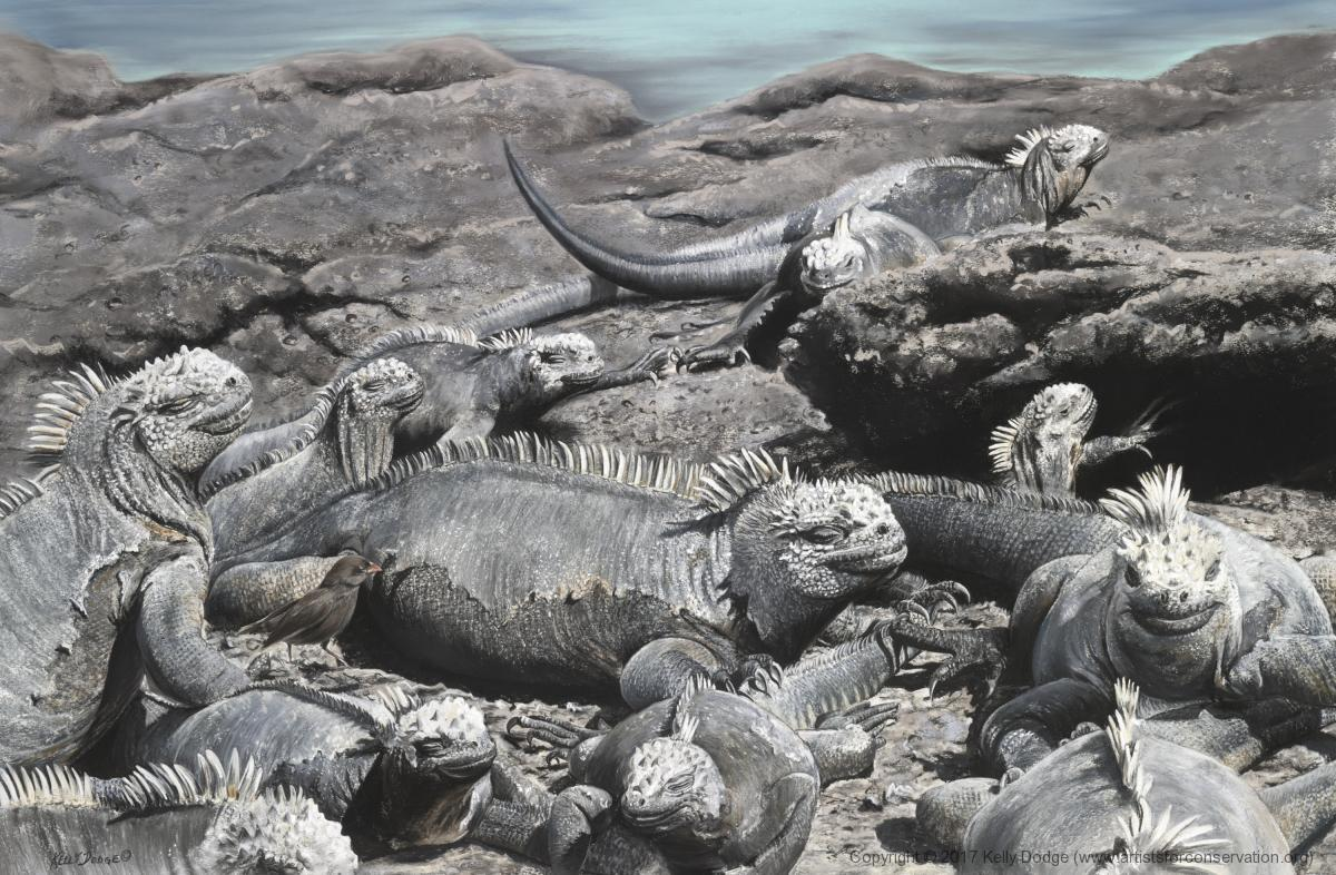 Edit Artwork   Wallhanging by Kelly Dodge   Artists for Conservation