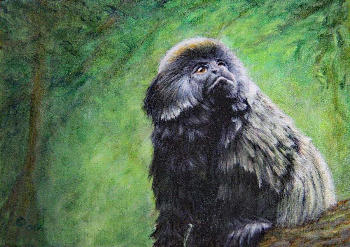 Add Artwork   Wallhanging by Cindy Sorley-Keichinger   Artists for Conservation