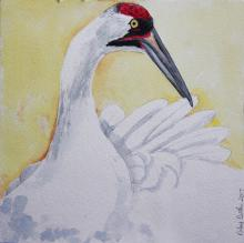 Whooping Crane by AFC