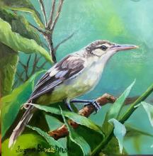 Tahiti Reed-warbler by AFC