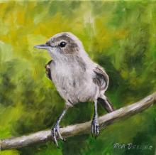 Millerbird, Nihoa Millerbird, Nihoa Reed-warbler by AFC