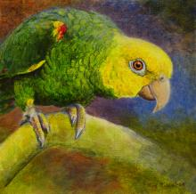 Yellow-headed Amazon, Yellow-headed Parrot by AFC