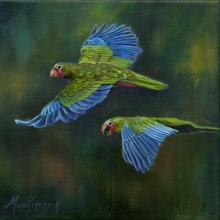 Puerto Rican Amazon, Red-fronted Amazon, Puerto Rican Parrot by AFC