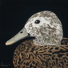 Laysan Duck, Laysan Teal by AFC