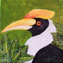 Sulu Hornbill by AFC