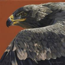 Steppe Eagle by AFC