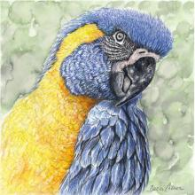 Blue-throated Macaw by AFC