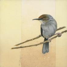 Mozambique Forest-warbler, Long-billed Tailorbird by AFC