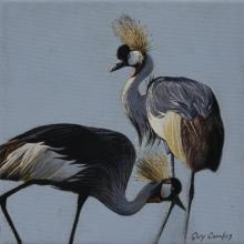 Grey Crowned-crane, Grey Crowned-Crane, Grey Crowned Crane, Southern Crowned Crane by AFC