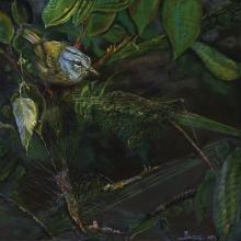 Grey-headed Warbler, Gray-headed Warbler by AFC