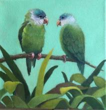 Grey-cheeked Parakeet, Gray-cheeked Parakeet by AFC
