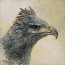Crowned Solitary Eagle, Crowned Solitary Eagle by AFC