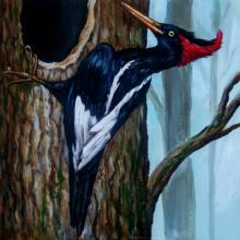 Imperial Woodpecker by AFC