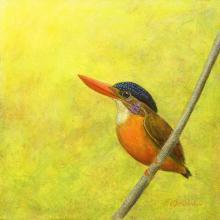Sangihe Dwarf-kingfisher by AFC