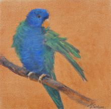 Blue-fronted Lorikeet by AFC