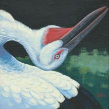 Oriental Stork, Oriental White Stork, Japanese White Stork by AFC