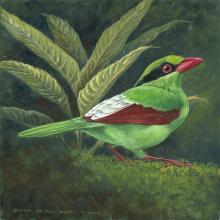 Javan Green Magpie by AFC