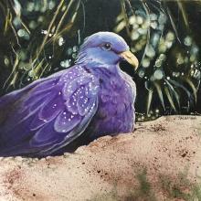 Sao Tome Olive-pigeon, Sao Tome Olive Pigeon, Maroon Pigeon, Sao Tome Olive-Pigeon by AFC