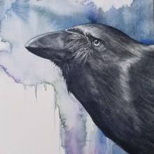 Hawaiian Crow by AFC