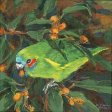 Coxen's Fig-parrot by AFC