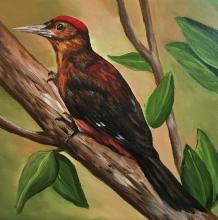 Okinawa Woodpecker, Noguchi's Woodpecker, Pryer's Woodpecker by AFC