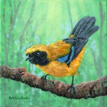 Carriker's Mountain-tanager by AFC