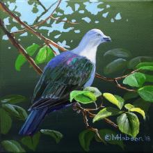 Polynesian Imperial-pigeon, Polynesian Imperial-Pigeon, Polynesian Imperial Pigeon, Society Islands Pigeon by AFC
