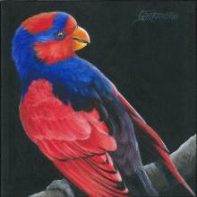 Red-and-blue Lory by AFC