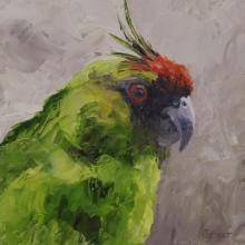 Ouvea Parakeet by AFC