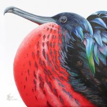 Christmas Frigatebird, Andrews' Frigatebird by AFC