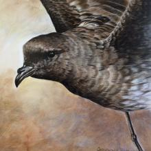 New Zealand Storm-petrel , New Zealand Storm Petrel by AFC