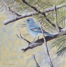 Gran Canaria Blue Chaffinch by AFC