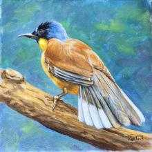 Blue-crowned Laughingthrush by AFC