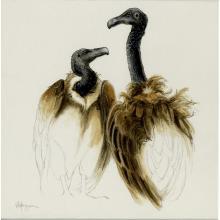 Slender-billed Vulture by AFC