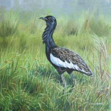 Bengal Florican, Bengal Bustard by AFC