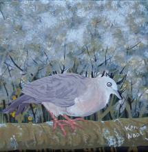 Tolima Dove by AFC