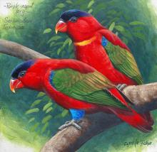 Purple-naped Lory, Purple-capped Lory by AFC