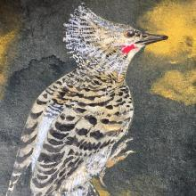 White-rumped Woodpecker, Buff-rumped Woodpecker by AFC