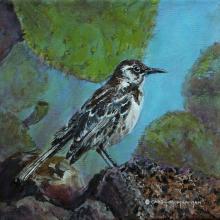 Floreana Mockingbird, Charles Mockingbird by AFC