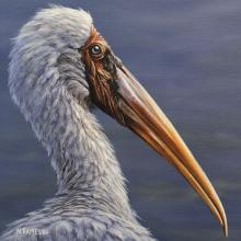 Milky Stork by AFC