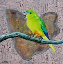 Orange-bellied Parrot, Orange-bellied Parakeet by AFC