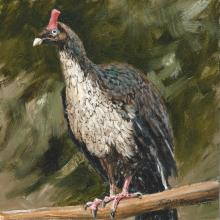 Horned Guan by AFC
