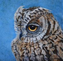Annobon Scops-owl by AFC